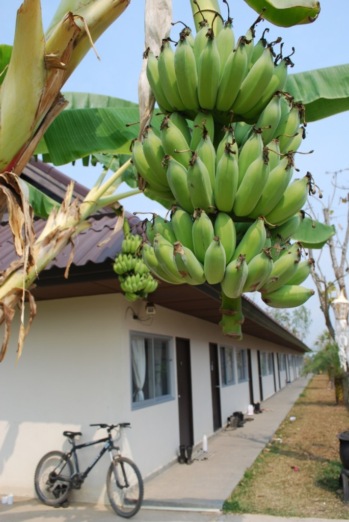 They grow their own bananas! Yummy.