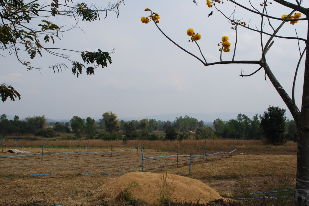 Fields near the Foundation