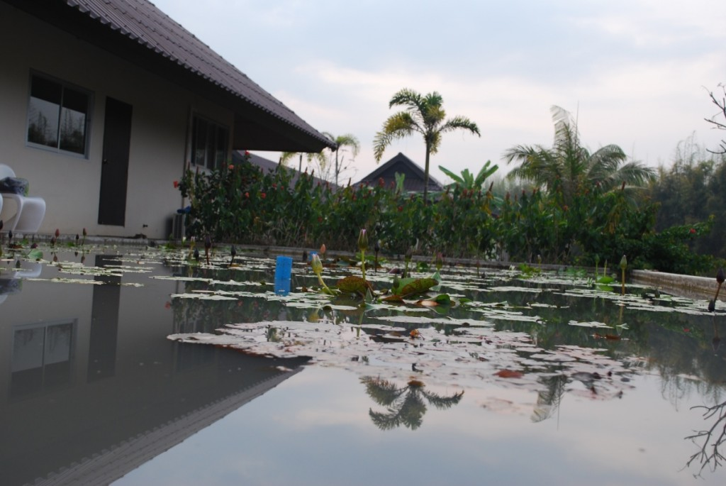 A pond next to the Foundation office